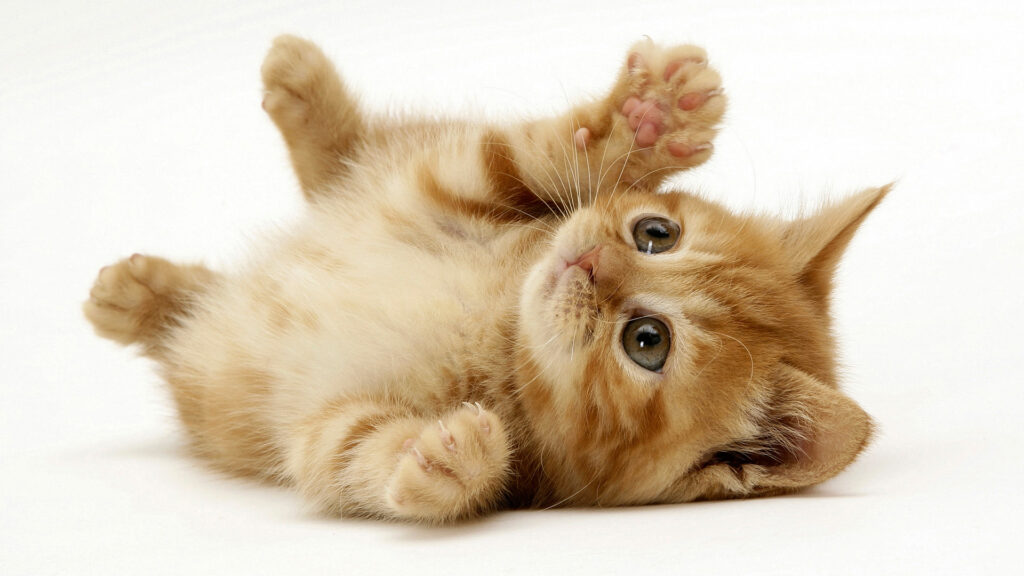Cute kitten for millennials who can't find jobs to look at