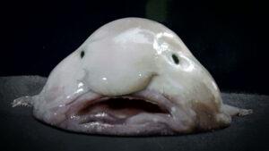 the blobfish, f'd up news